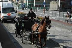 Oostende-cavallo-a_JPG