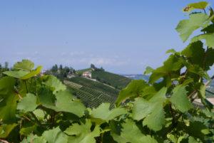 Alla ricerca della Provenza Piemontese
